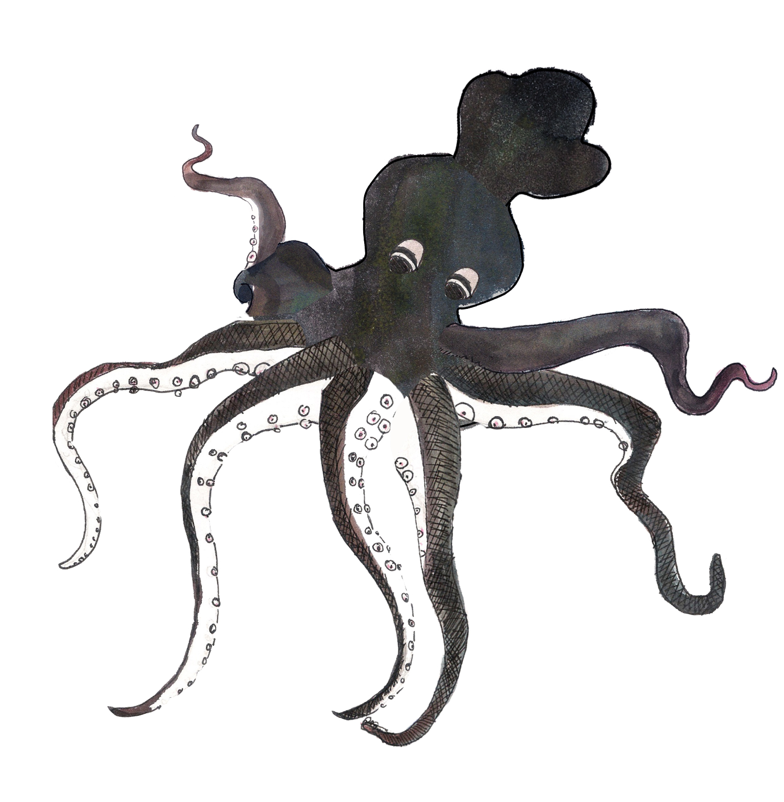 Short Anime, Minoan Octopus
